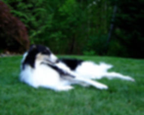 calvin+laying+in+yard.jpg