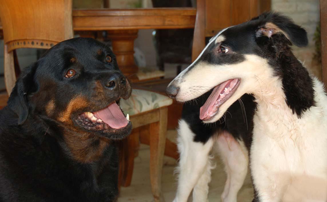 Yuri and his Rotti friend