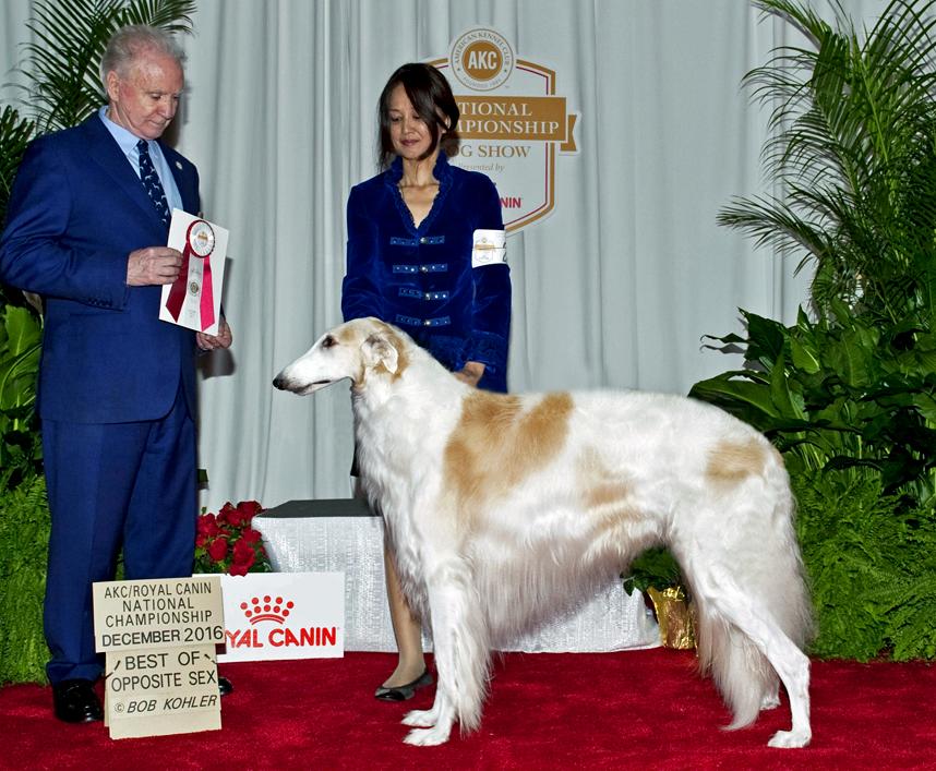 Quinn BOS Royal Canin Show