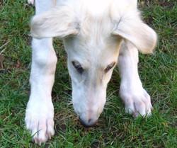 Quinn sniffing the grass