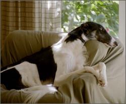 Anya elegant in repose