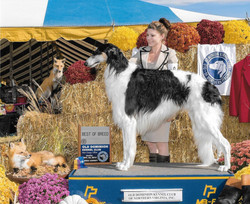 Lance Best of Breed