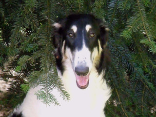 Miia Amongst The Pines