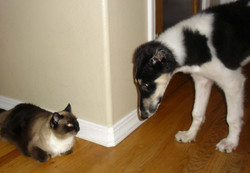 Misha meeting his kitty friend