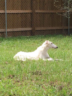 Viv lounging in the grass