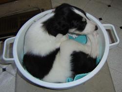 puppyculendar.jpg