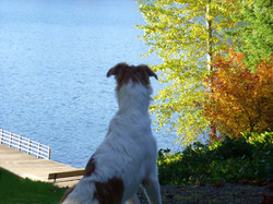 Red gazing at the lake