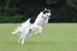 Drogo loves to run!