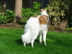 Beau sees a bird in the bush