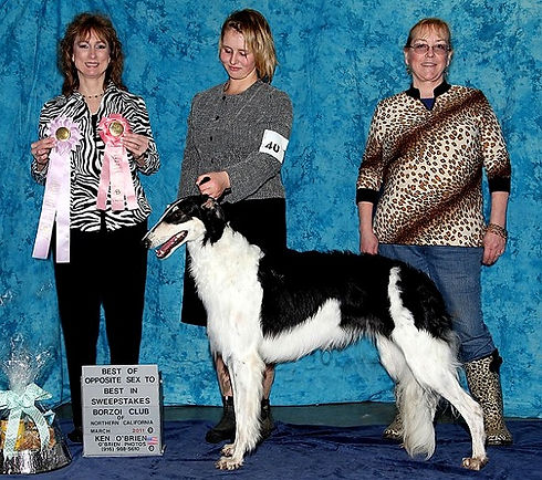 Borzoi_C2611-6926_BOS_Sweeps_CLUB_edited