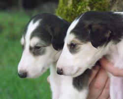puppyprofiles.jpg