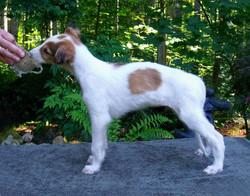 Shax puppy stack