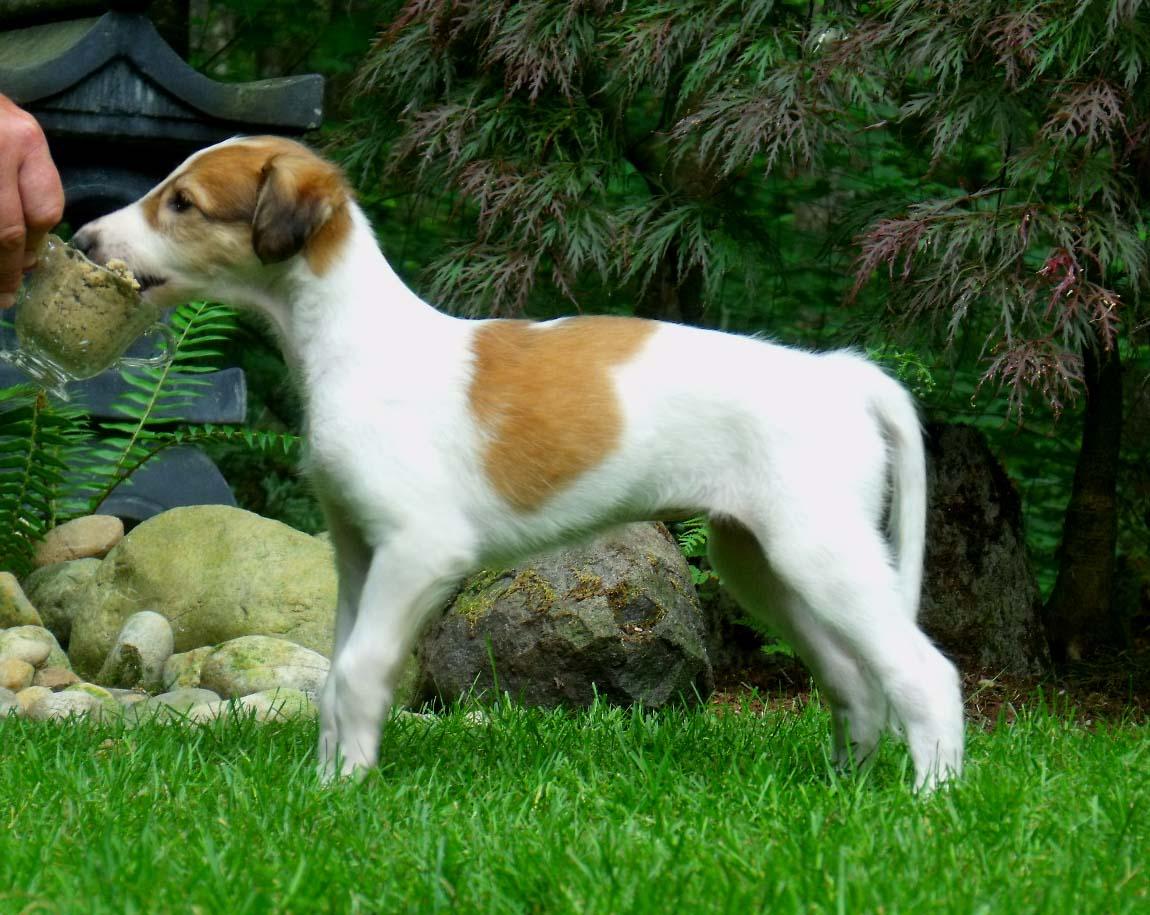 Cher puppy stack
