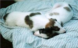 puppylove.jpg