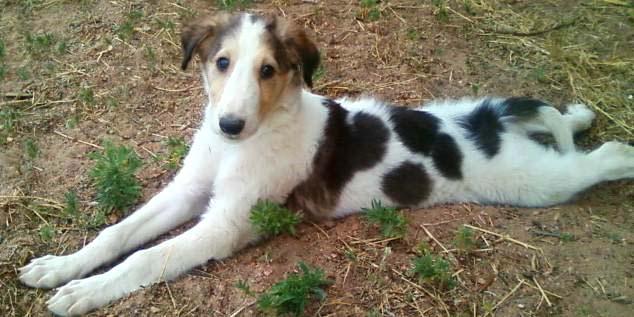 Jasmine as a puppy