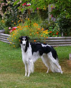 Brilly alert in the garden