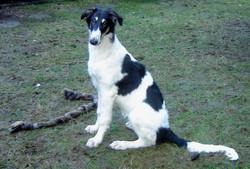 Miia as a young pup