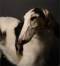 Ziva's stunning portrait