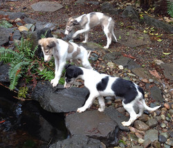 The kids looking into the pond