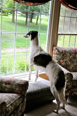 Anny looking at the squirrels