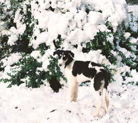 Brill in the snow