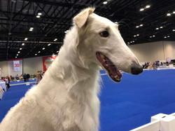Vivian at the Royal Canin dog show