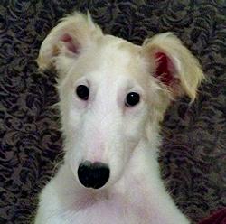 Dmitry's pretty puppy face