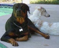 Quinn with his friend Mocha