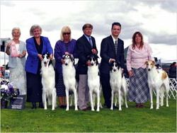 Cooper Best in Stud Dog win picture PSBC