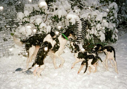 Brill and her sisters enjoying a snow st