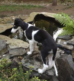 Karenina exploring the pond