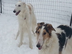 Jasmine with her buddy in the snow