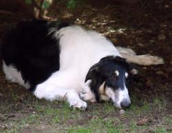 Miia under a pine