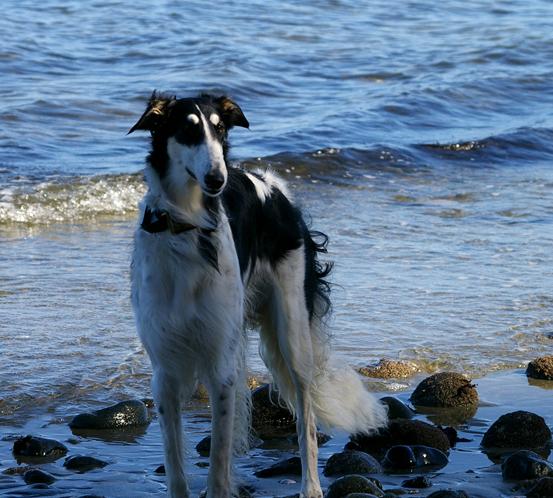 Brill at the ocean