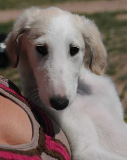 Gracie's cute puppy face