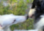 BonbonandVivianCropped3_edited.jpg