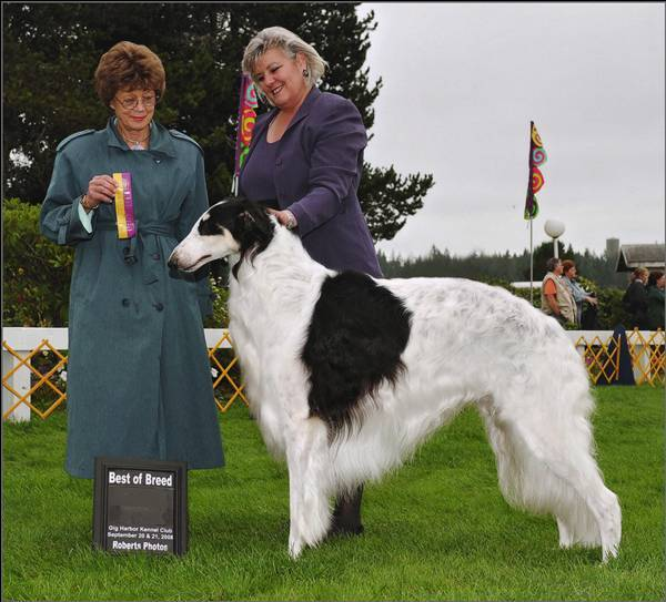 Cooper Best of Breed
