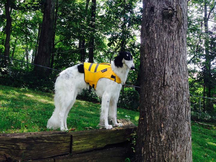 Tiggy with her lifevest on