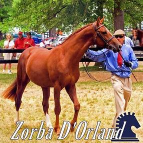 Zorba D'Orland