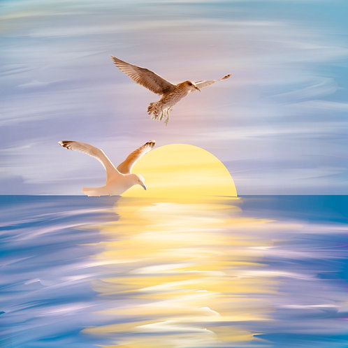 Greeting Card - Gulls at sunset