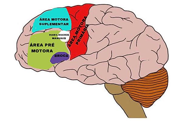 cortex.JPEG