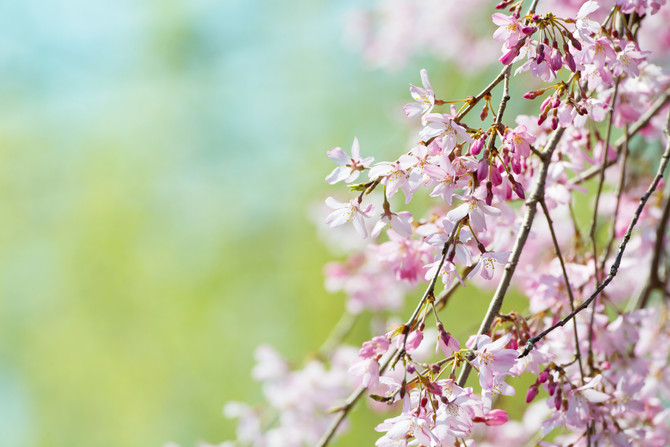 7 Natural Treatments For Seasonal Allergies