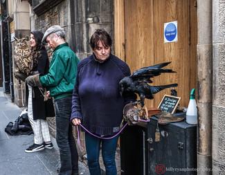 birds-scotland-editorial.jpg