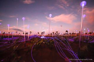 lifestyle-field-of-lights-uluru.jpg