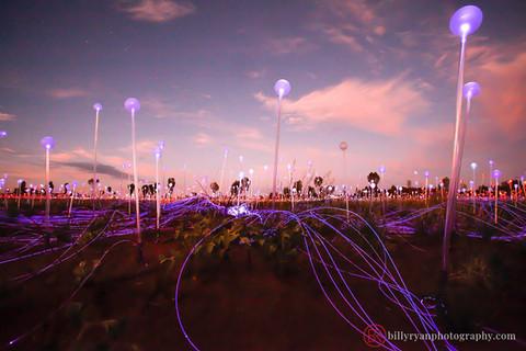 Field of Light Installation