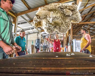 lifestyle-wool-sheep-shearers.jpg