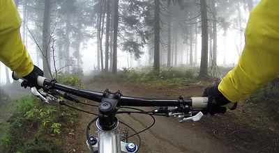 fahrradfahrer wald-828646_1920.jpg