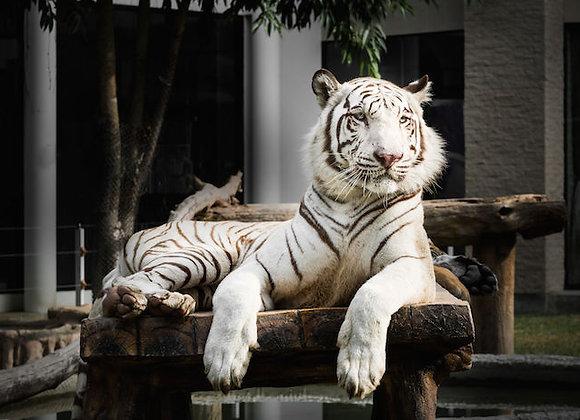 Inti Harimau
