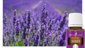 Everything you need know about Lavender essential oil: Young Living Training and Education