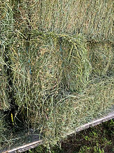 Baler Twine from Protexia Big Tex Twine
